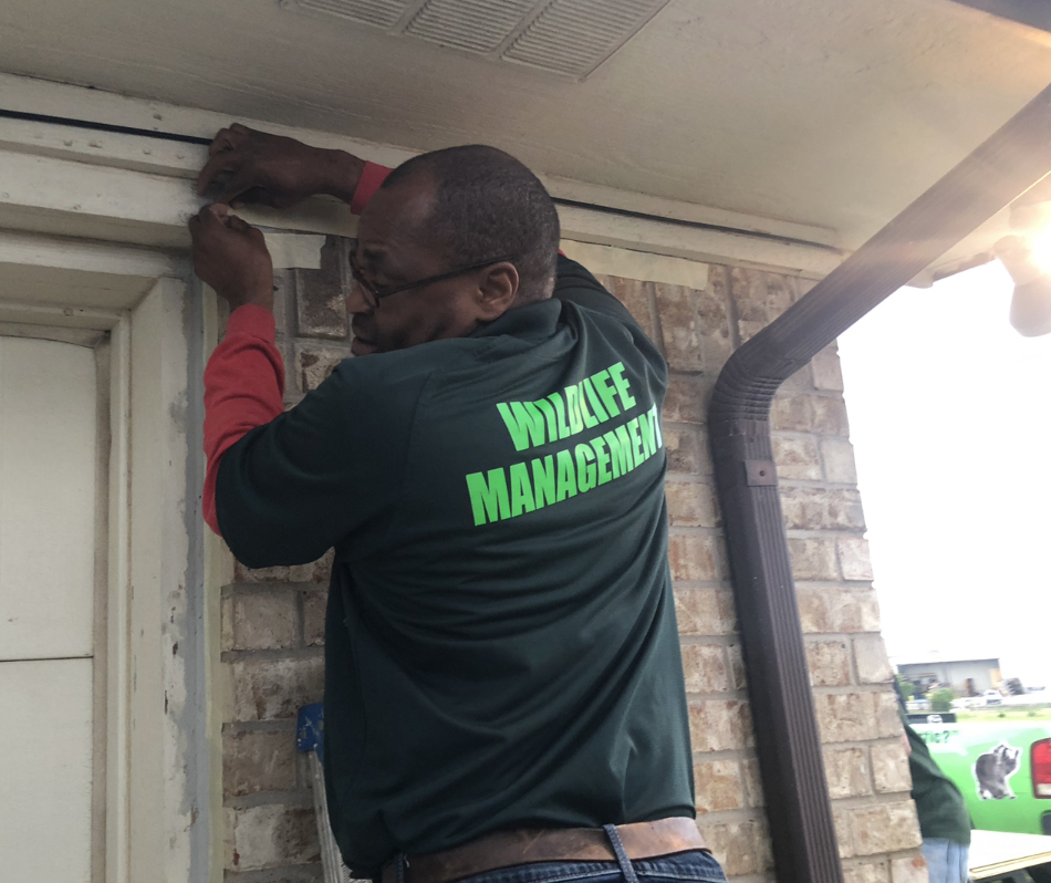 Wildlife X Team® Fort Worth Fixing Roof Damage